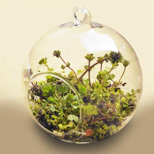 2pcs Vase Hanging Clear Terrarium Planter Flower