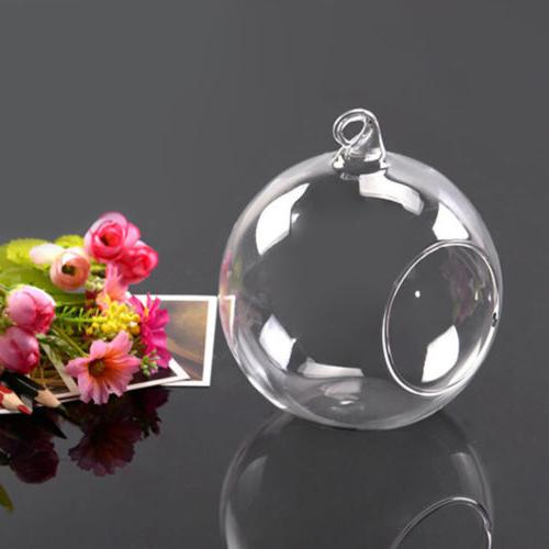 6pcs Hanging Glass Globe Ball Light Air Plant Terrarium