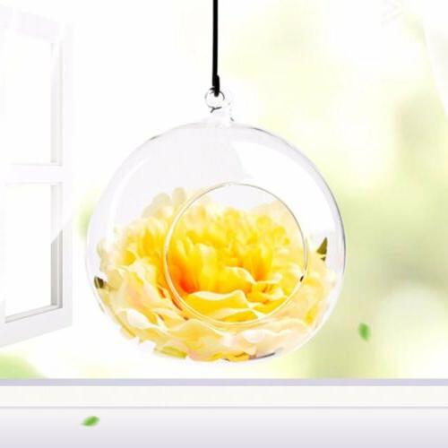 6pcs Clear Globe Ball Light Terrarium